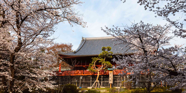 Pagoda in Ueno park in springtime during cherry blossom season, Tokyo, Japan