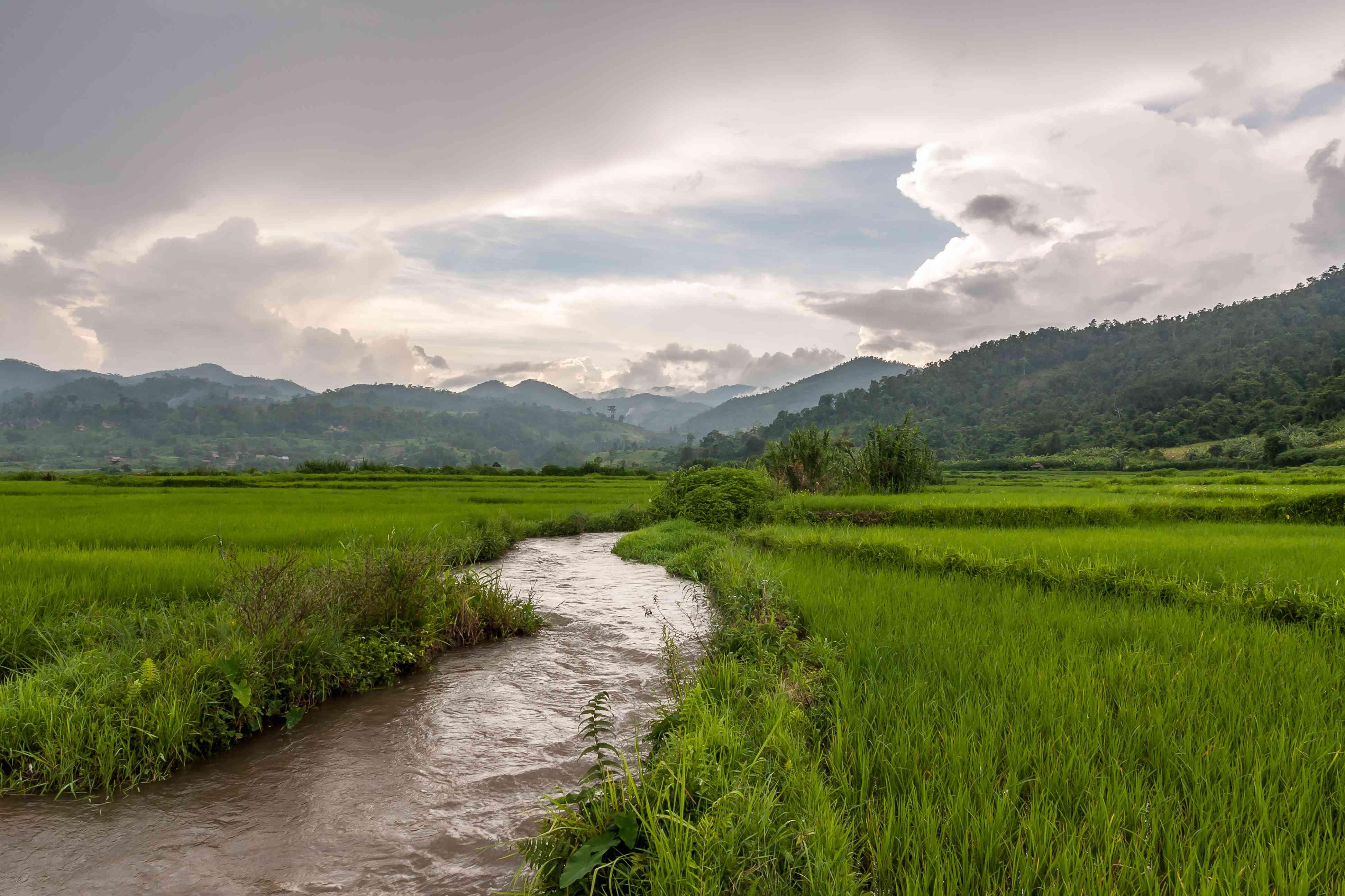River traversing green rice paddies