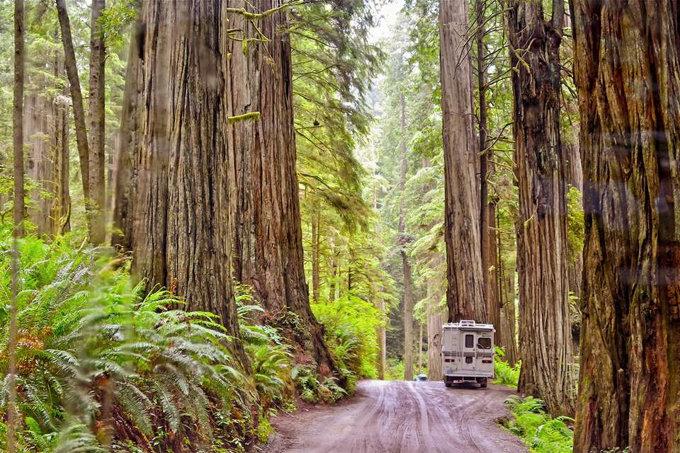 Howland Hill Road en Jedediah Smith Redwoods