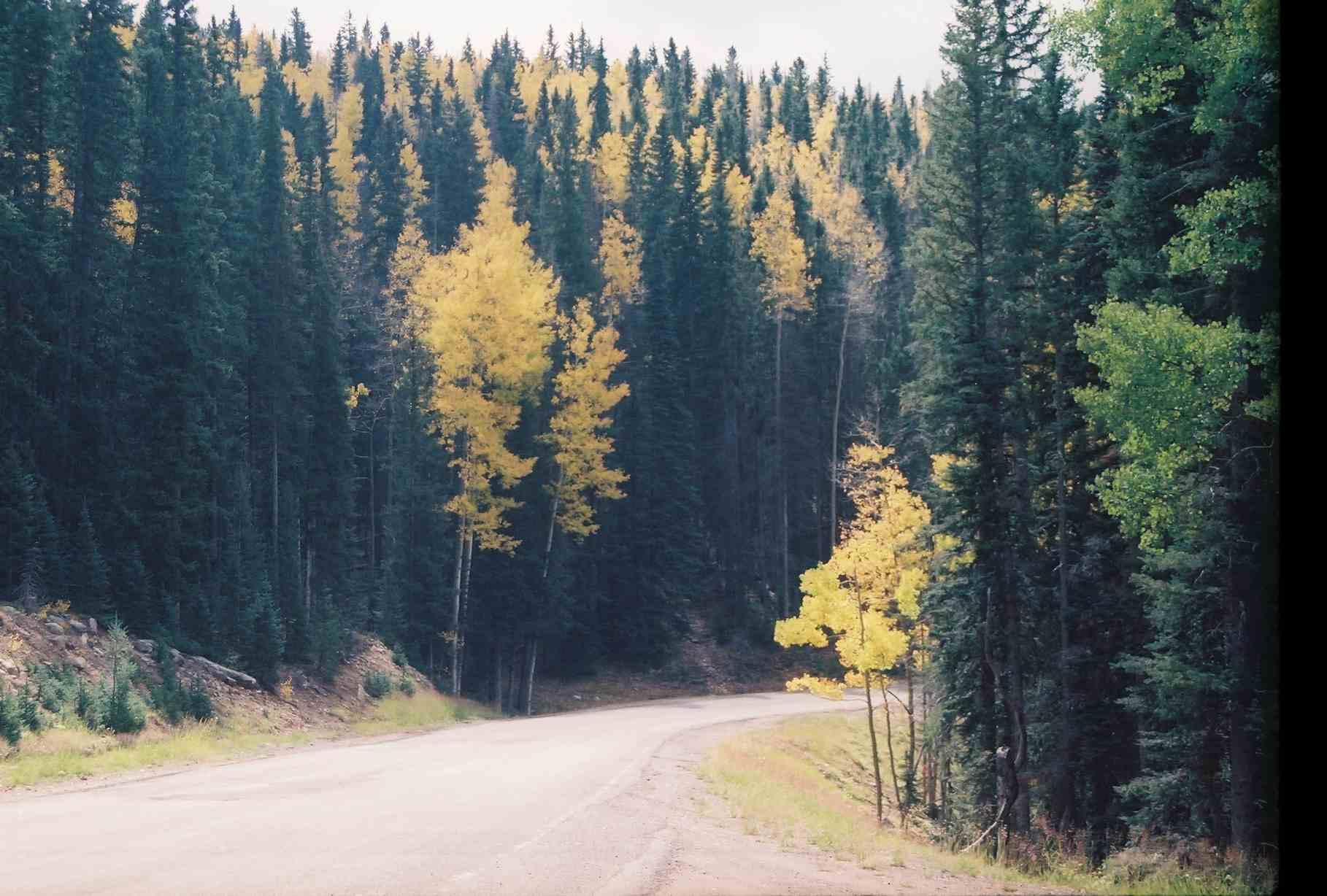 Bosque Nacional Santa Fe
