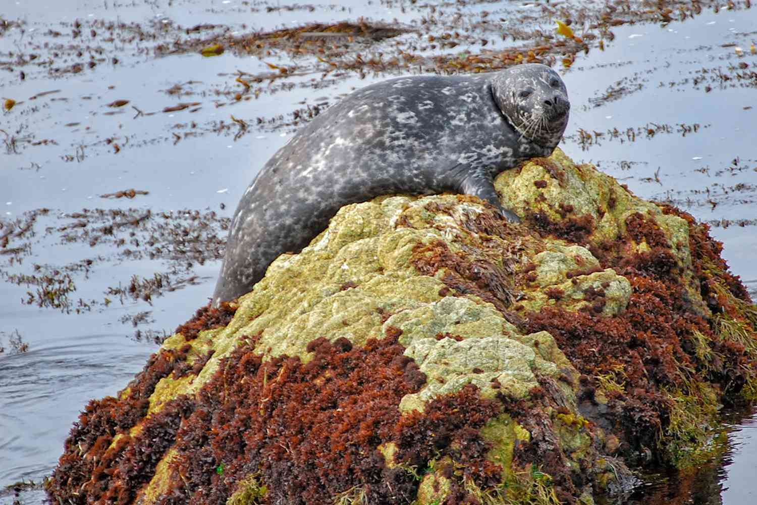 17-Mile Drive - Must-Do Stops and Proven Tips on