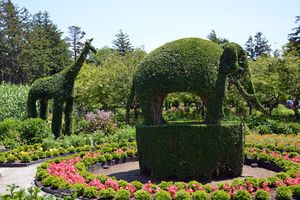 Giraffe and Elephant topiaries at Green Animals Topiary Garden