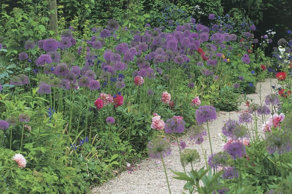Allium en Hidcote Manor Garden