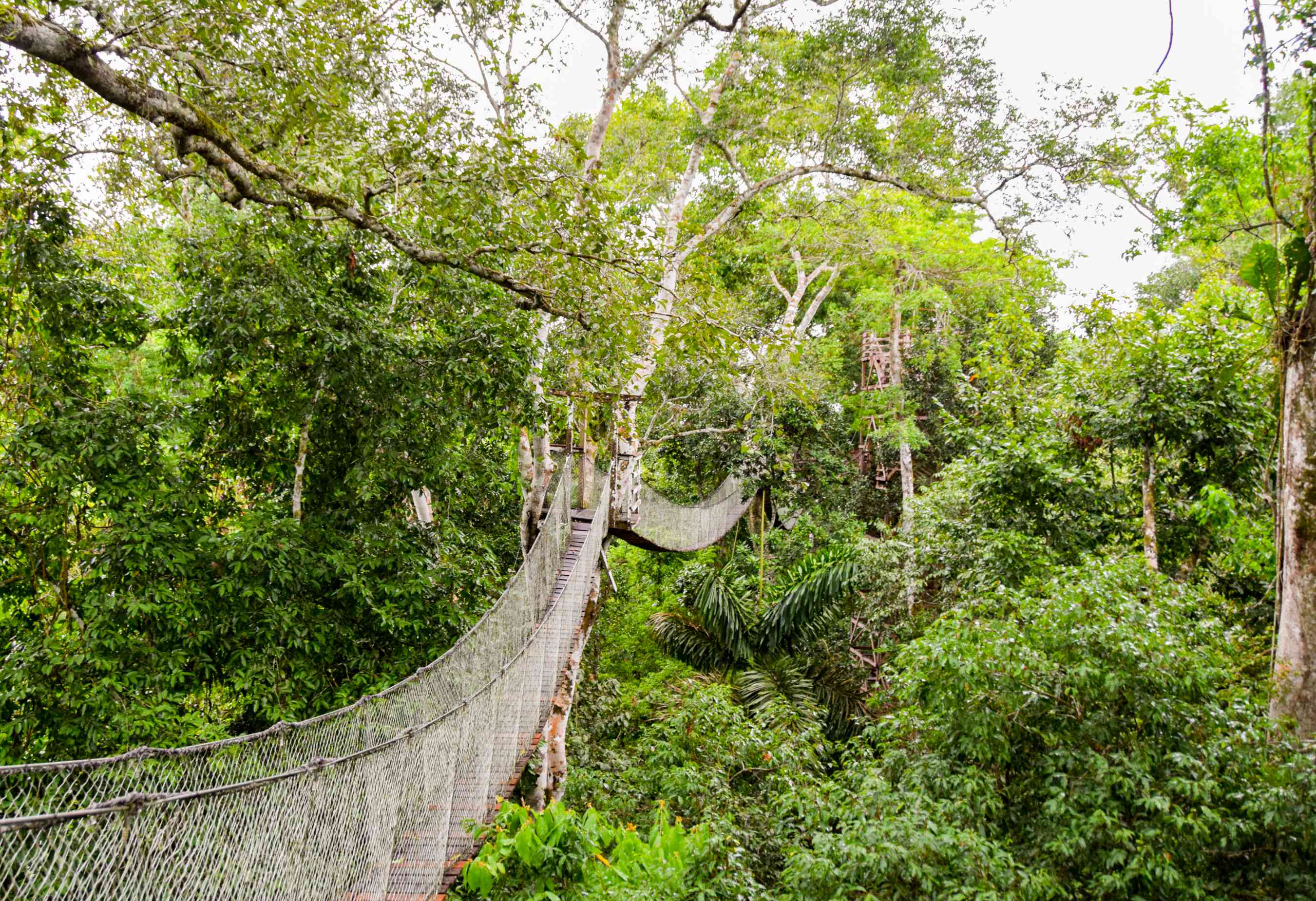 Bridges over the trees in the Amazon in Peru