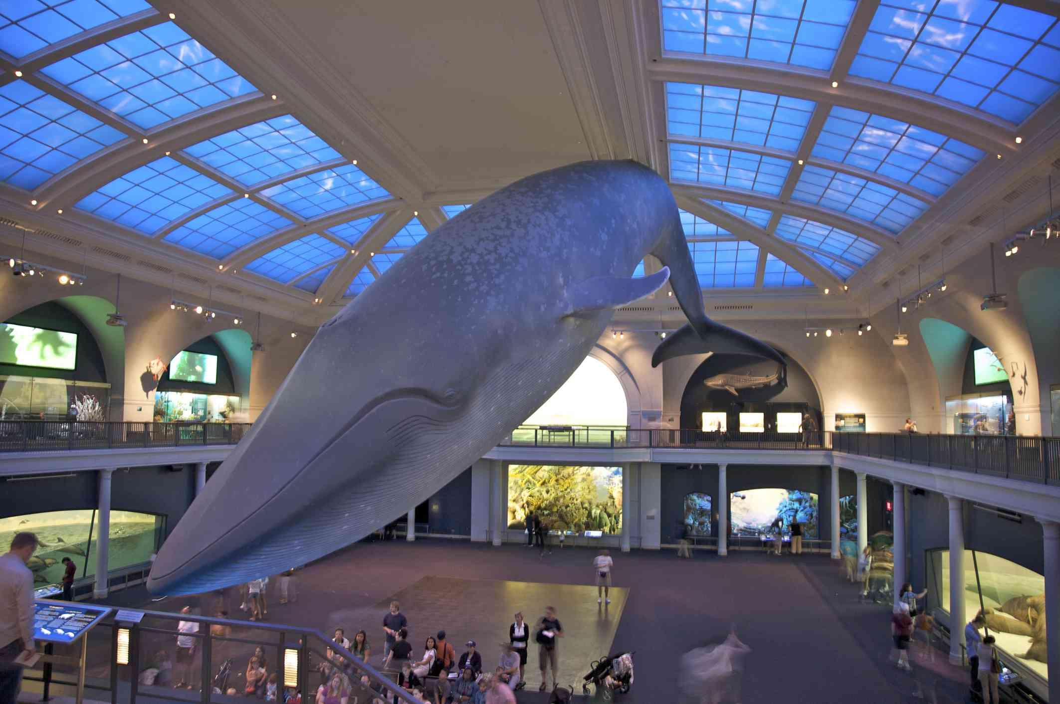 Interior con ballena azul