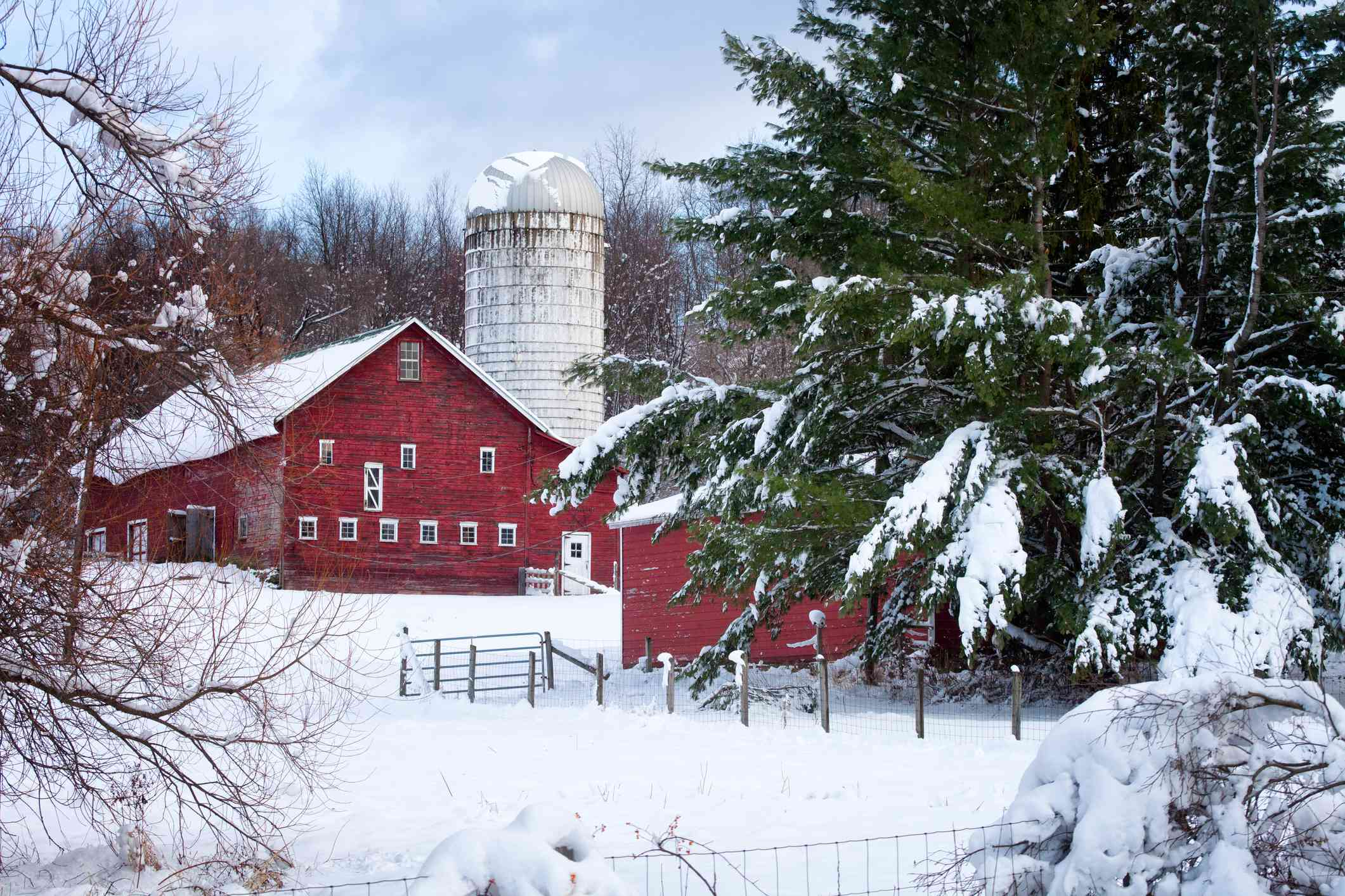 Red Barn and Silo, Early Winter