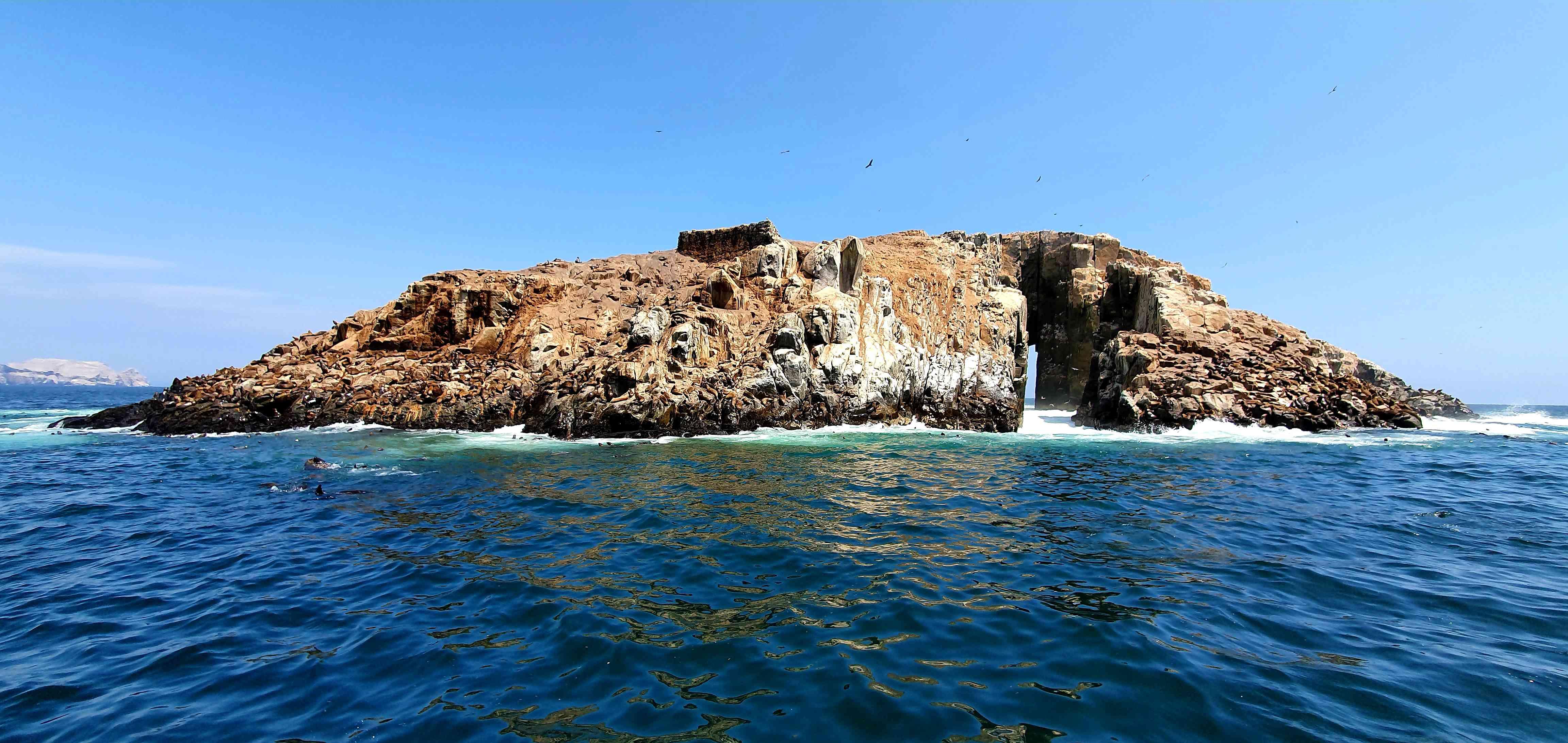 Amazing Peru. Sea Lions in Palomino Islands