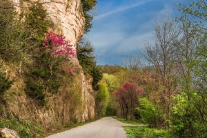 Recreational trail by Missouri River bluffs with blooming red bud treess
