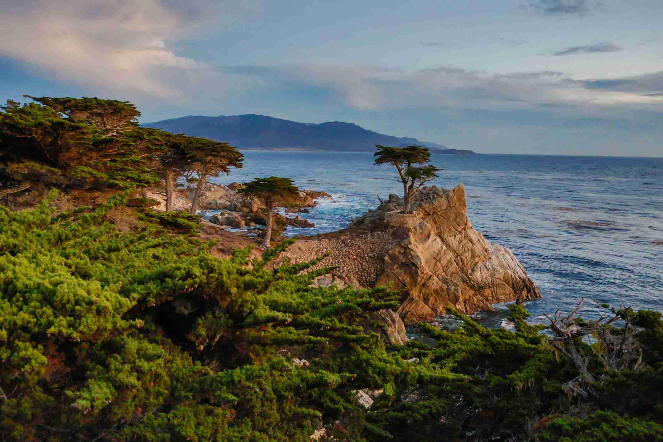 Ciprés solitario en la costa, Monterey, California