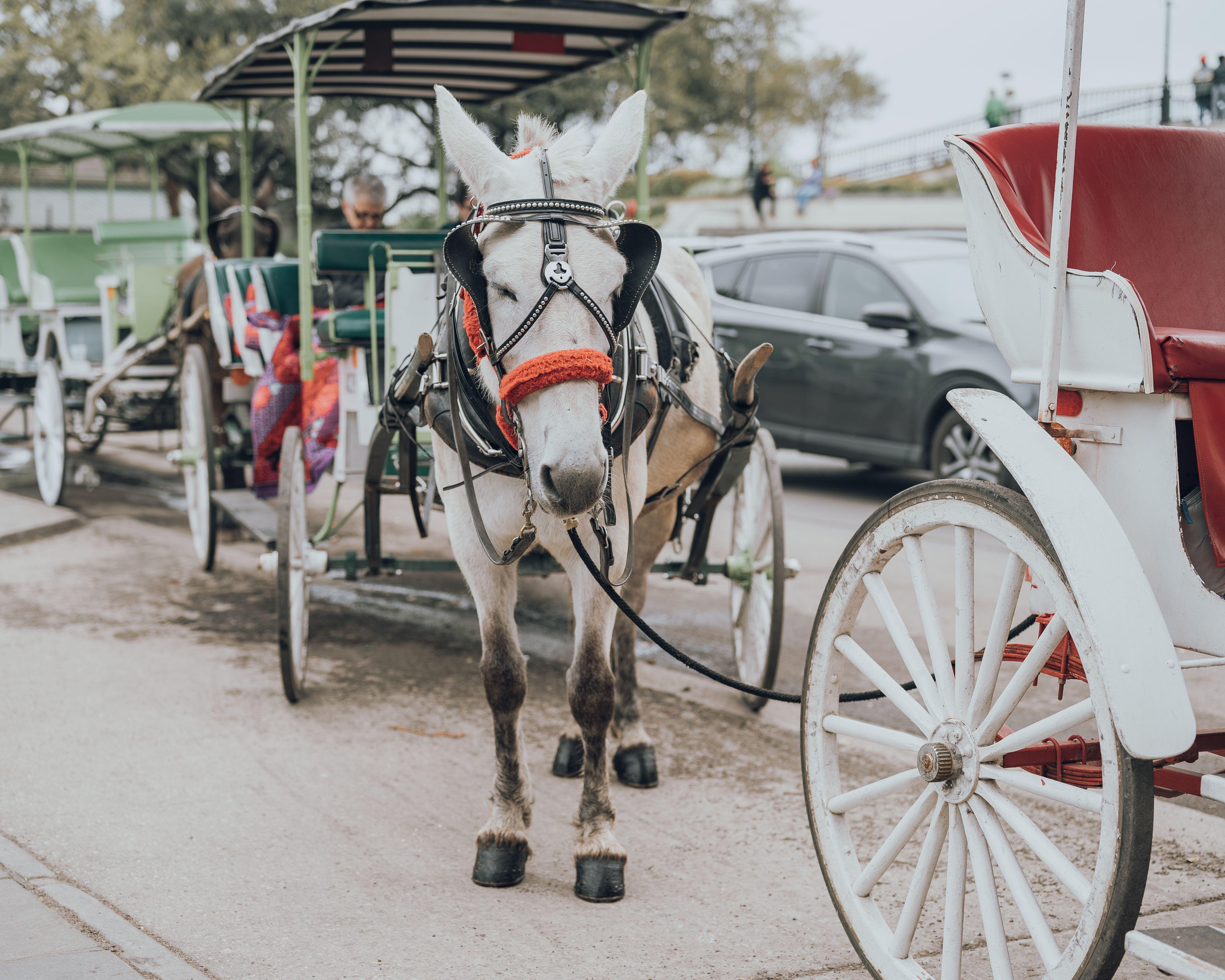 Carruajes tirados por caballos en Jackson Square