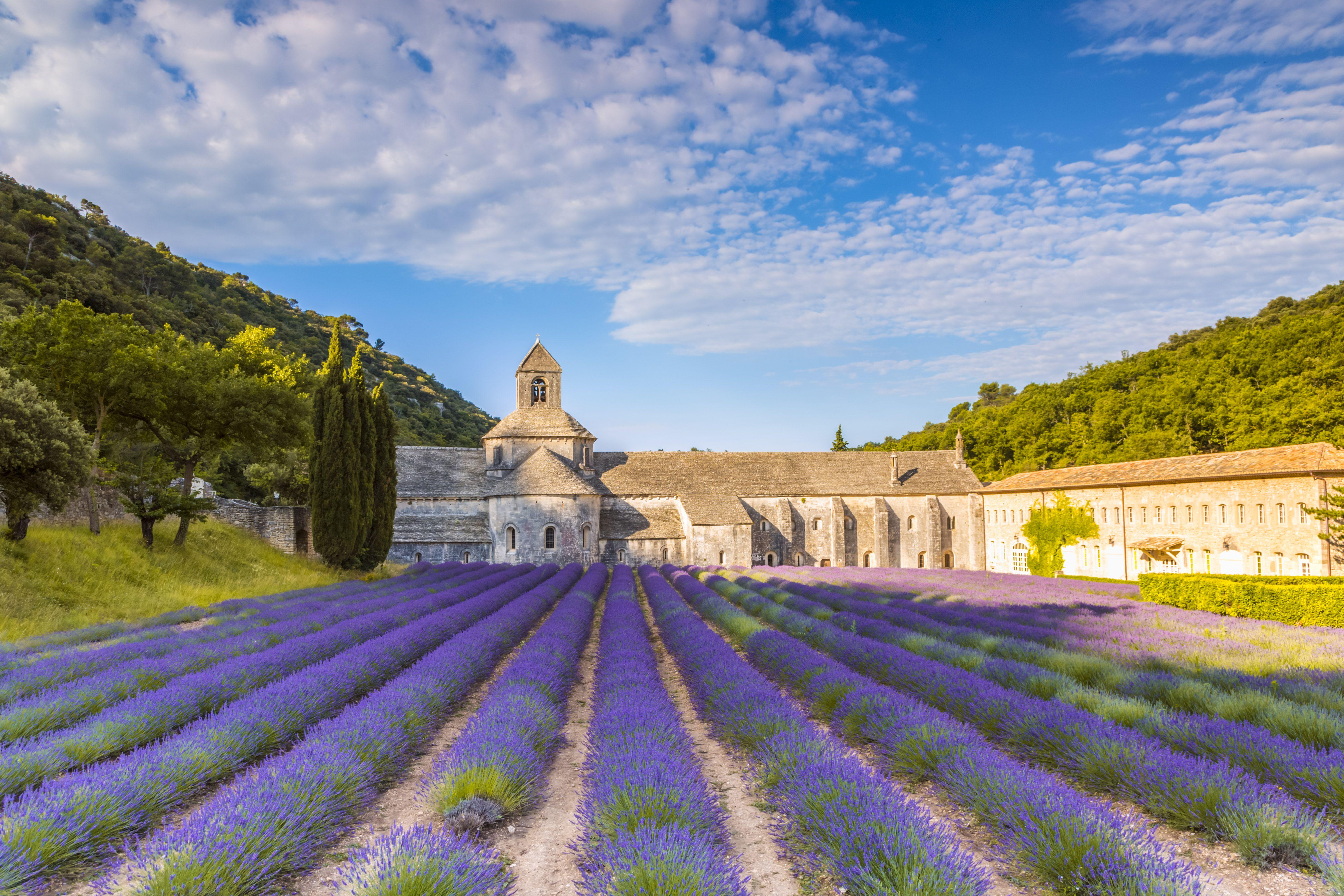 France, Provence Alps Cote dAzur, Vaucluse, Famous Senanque abbey at sunrise