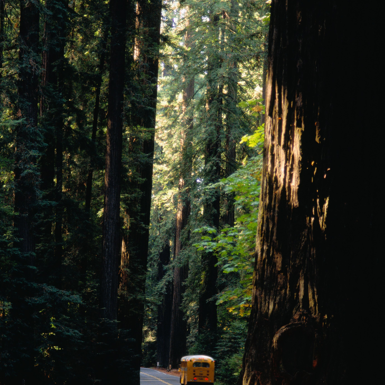 Avenue of Giants, Redwoods, California, USA