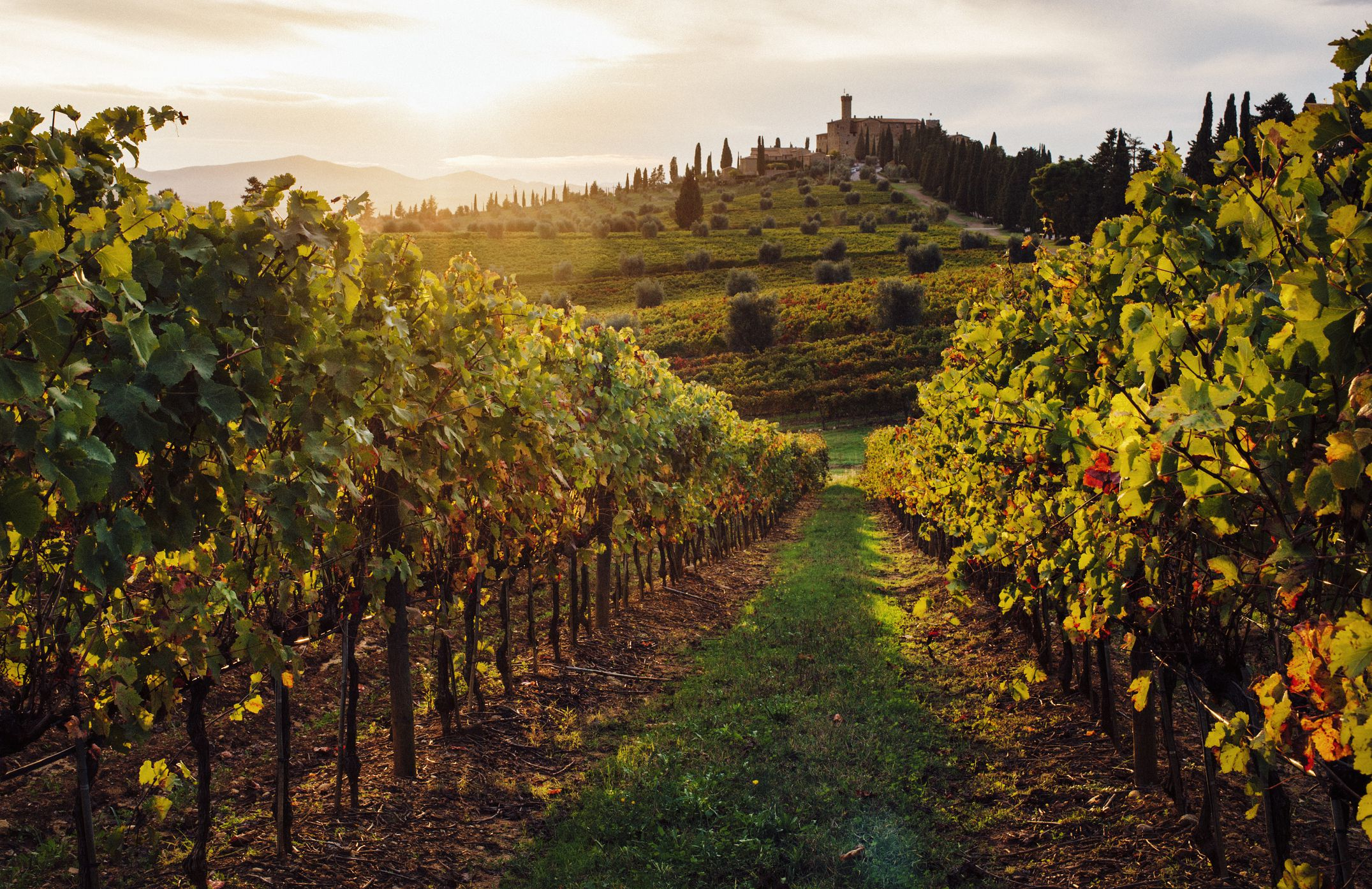 The 8 Best Tuscan Wine Tours Of 2020