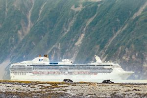 A Cruise Ship Passes By A Wolf Roaming In Fingers Bay, Glacier Bay National Park, Alaska, Usa