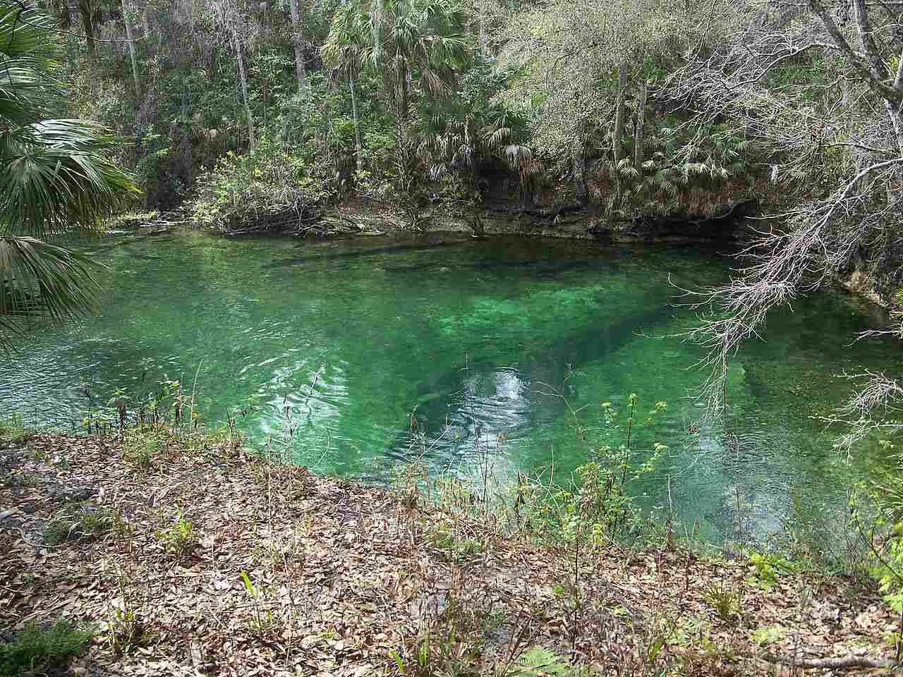 karst spring, in Blue Spring State Park, near Orange City, Florida