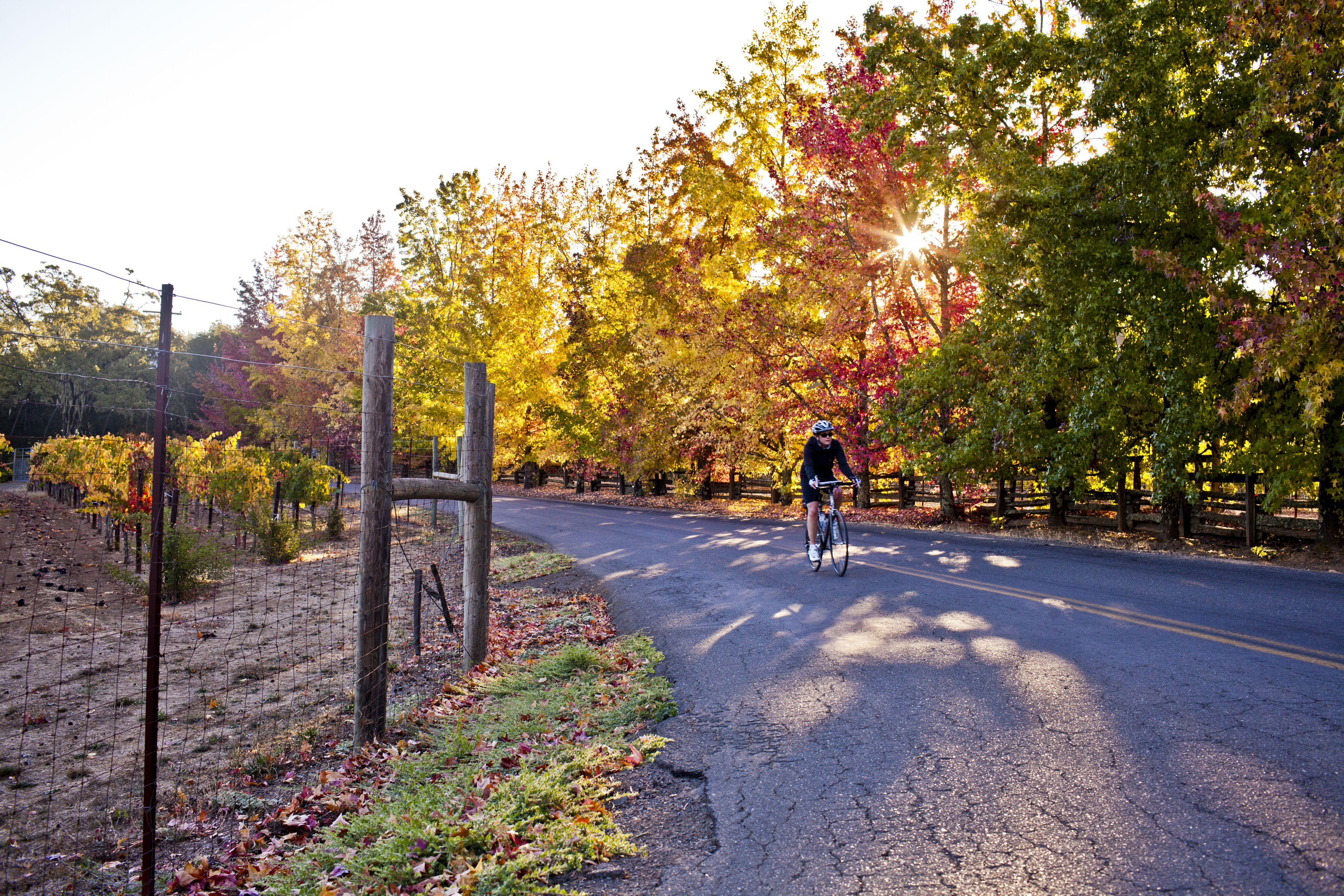 A women cycling on a rural road in Sonoma.
