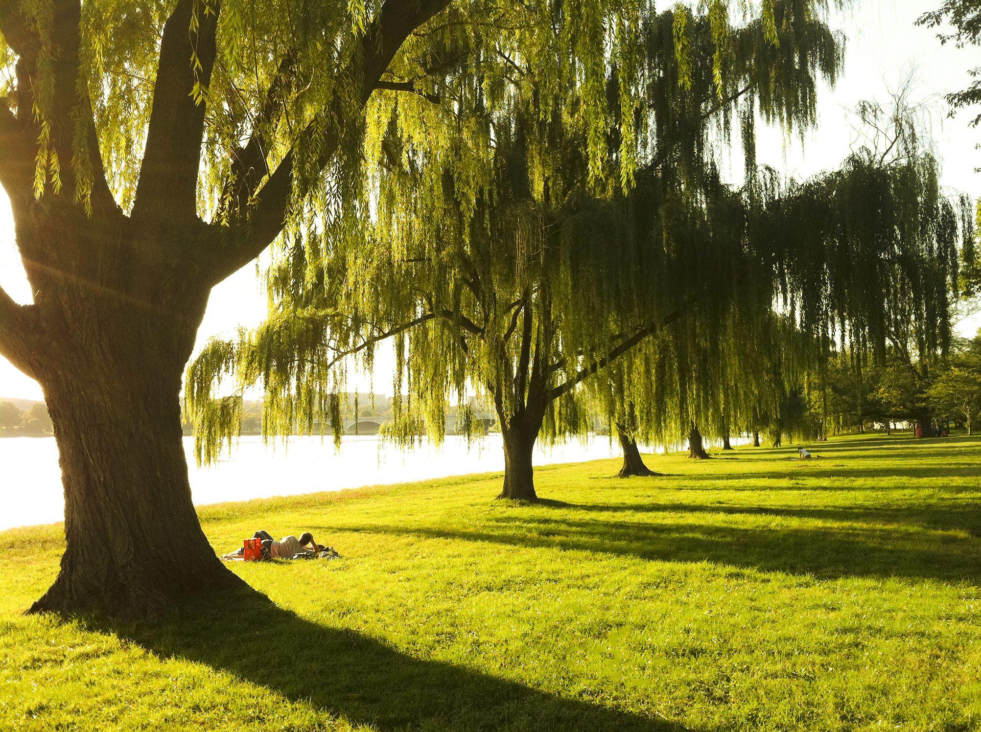 west Potomac River Park
