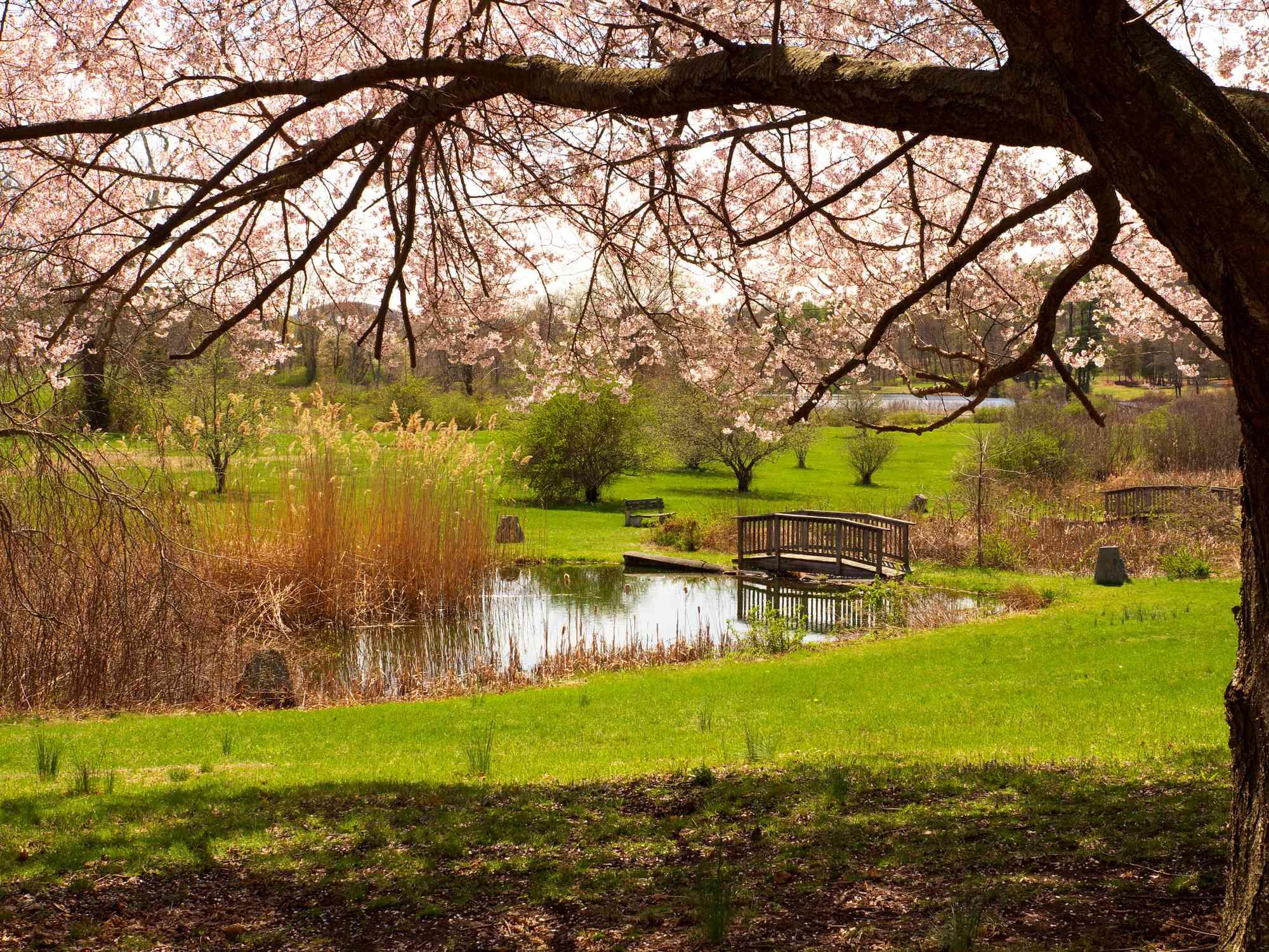 spring garden landscape at Ringwood Manor