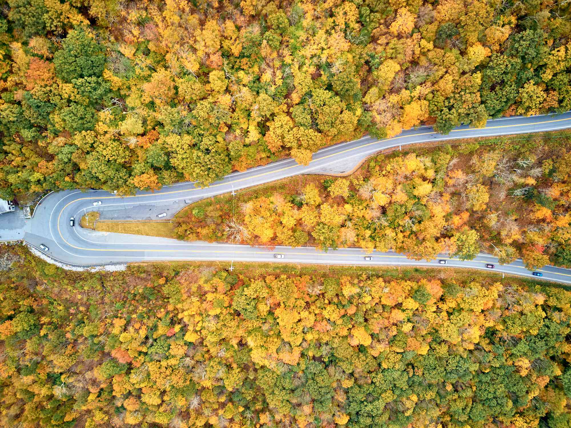 aeiral view of a hairpin turn through a yellow and green forest