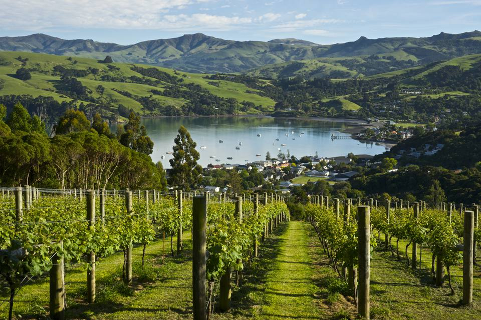 Rata Vineyard, New Zealand
