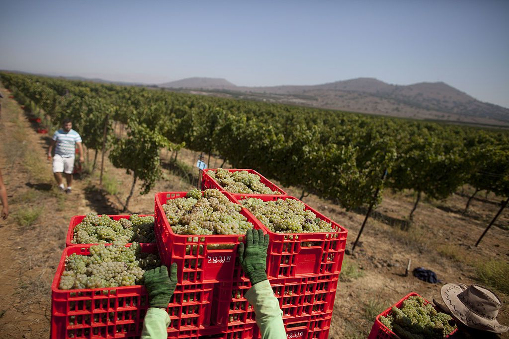Ortal Winery, Golan Heights, Israel