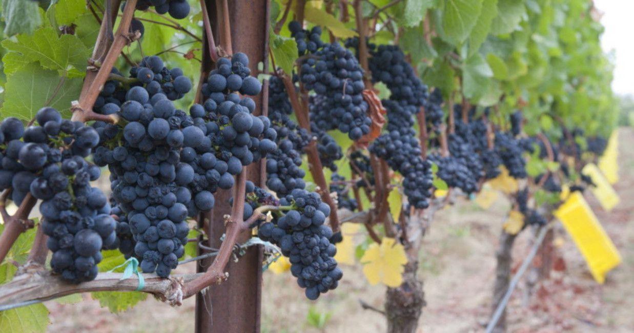 Vineyard on the WineWay