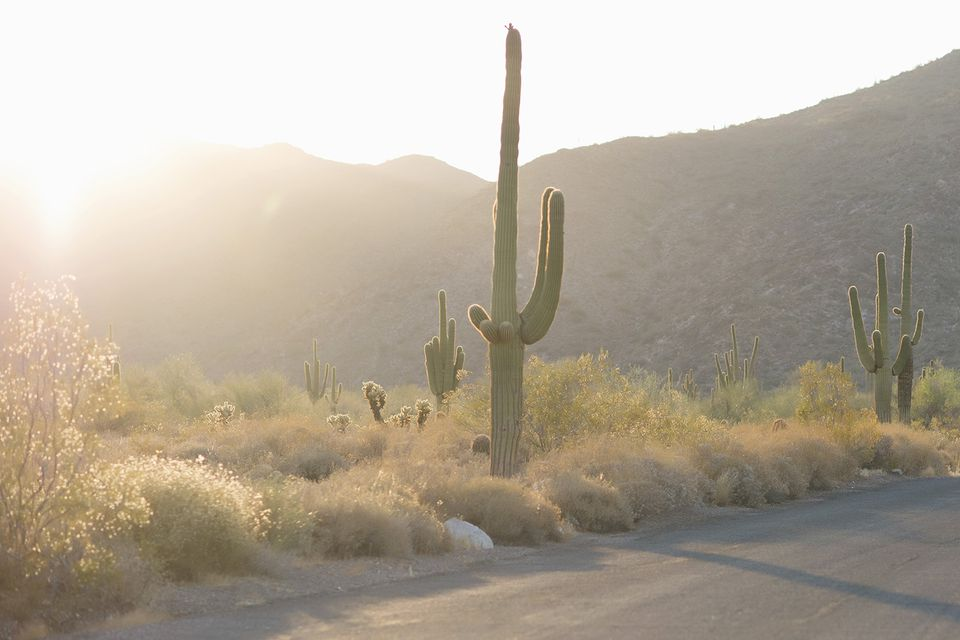 16 Things To Know About The Saguaro Cactus