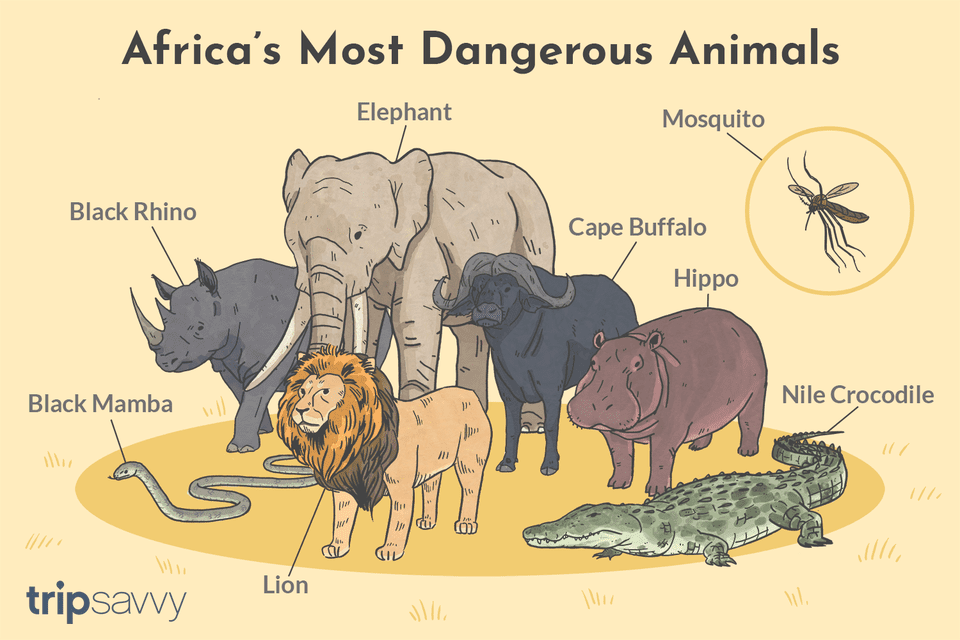 Top 10 List of Africa's Most Dangerous Animals