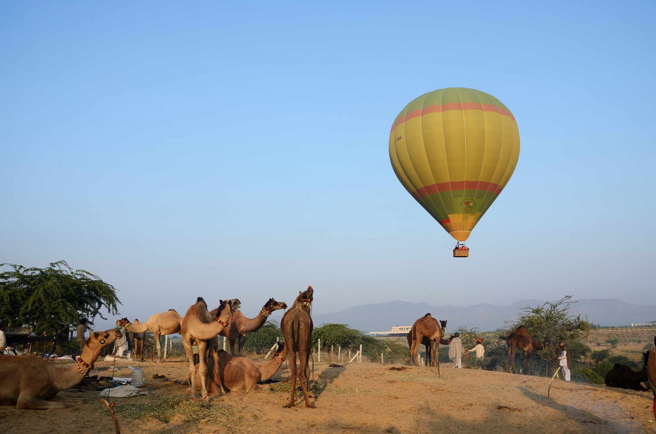 Hot air ballooning in India above camels.
