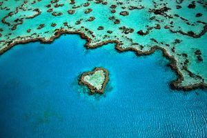 Aerial view of heart shaped coral part of the great Barrier Reef