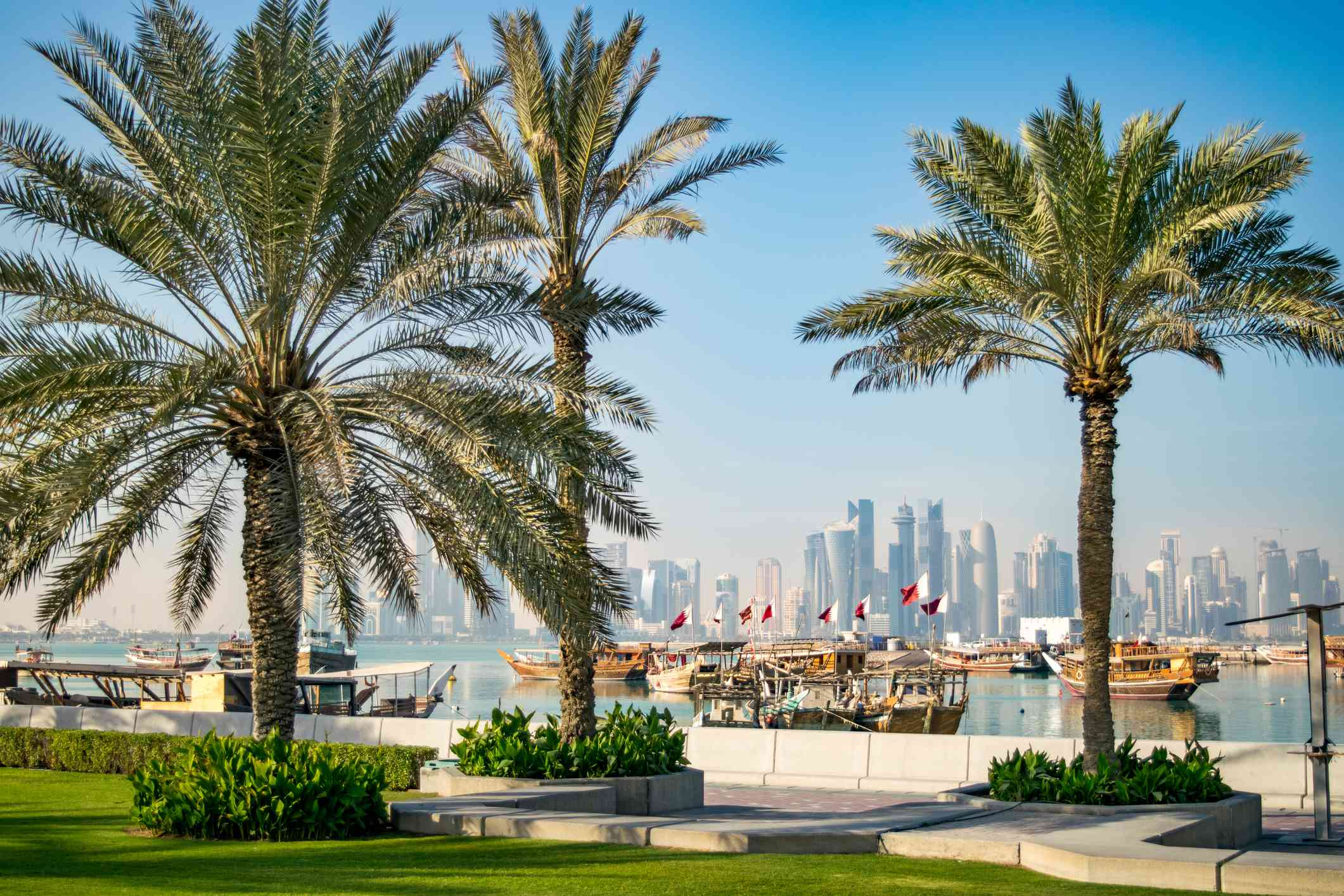 two palm trees in planters and one palm tree in the grass on the Corniche with boats in the water behind the path
