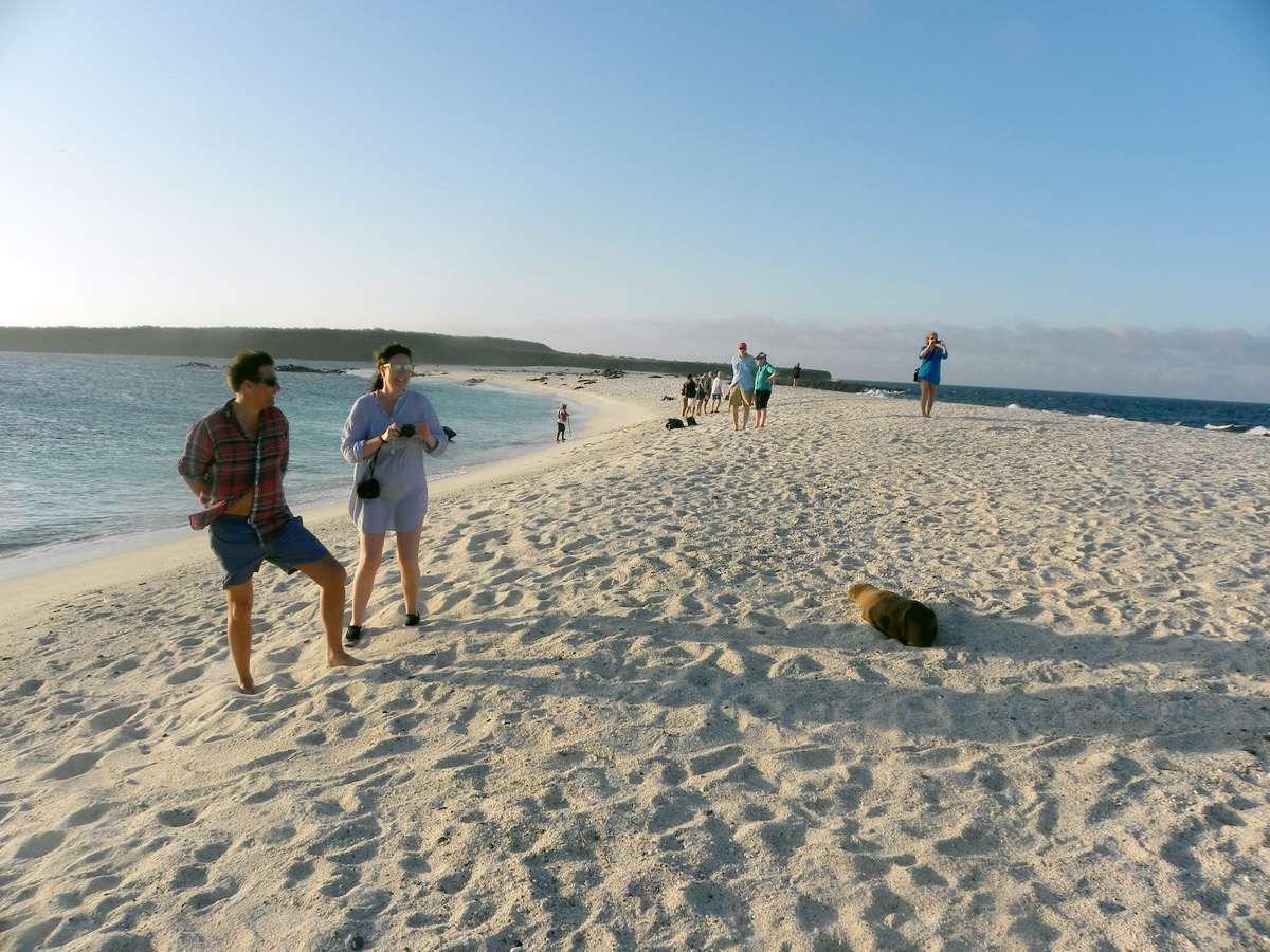 Expediciones del cuasar - Evolución M / V - Leones marinos en la isla de Mosquera en Galápagos