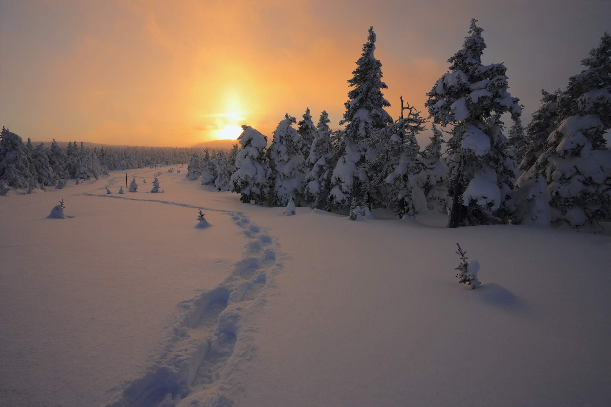 Path Through Trees At Sunset, Gaspesie National Park, Quebec