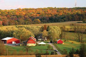 three red barn buildings and a vinyeard in autumn with trees in the distance