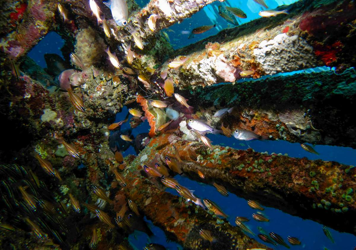 Fish swimming around a sunken ship in Amed