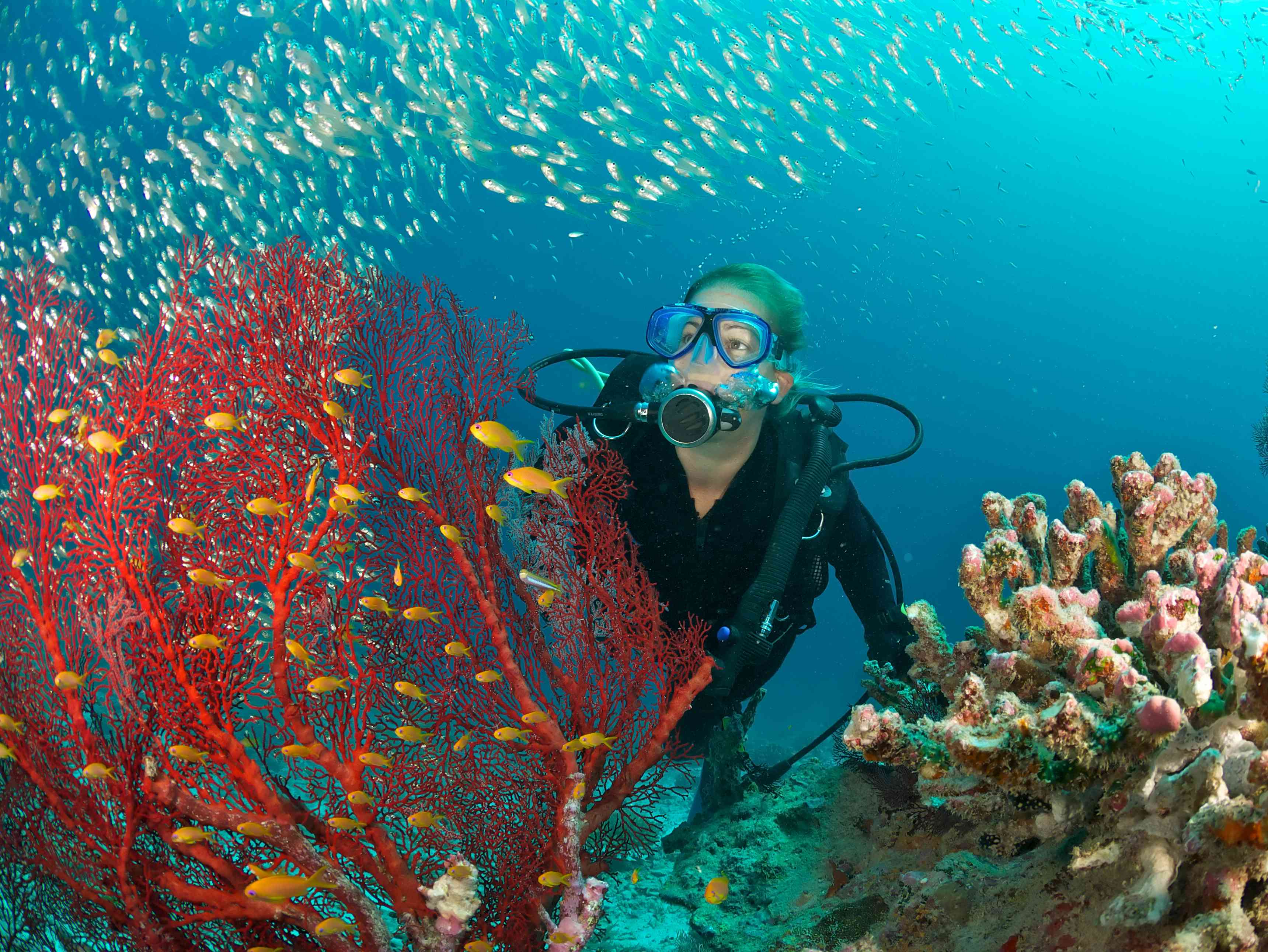 scuba diver admires fish and red fan coral