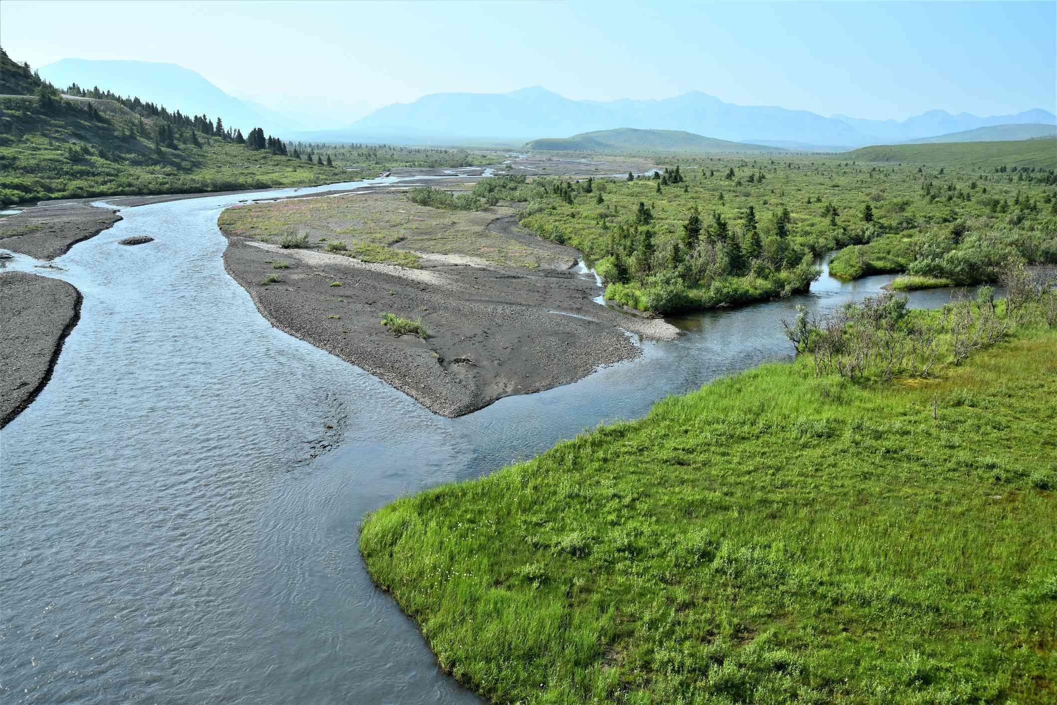 Savage River Ecosystem