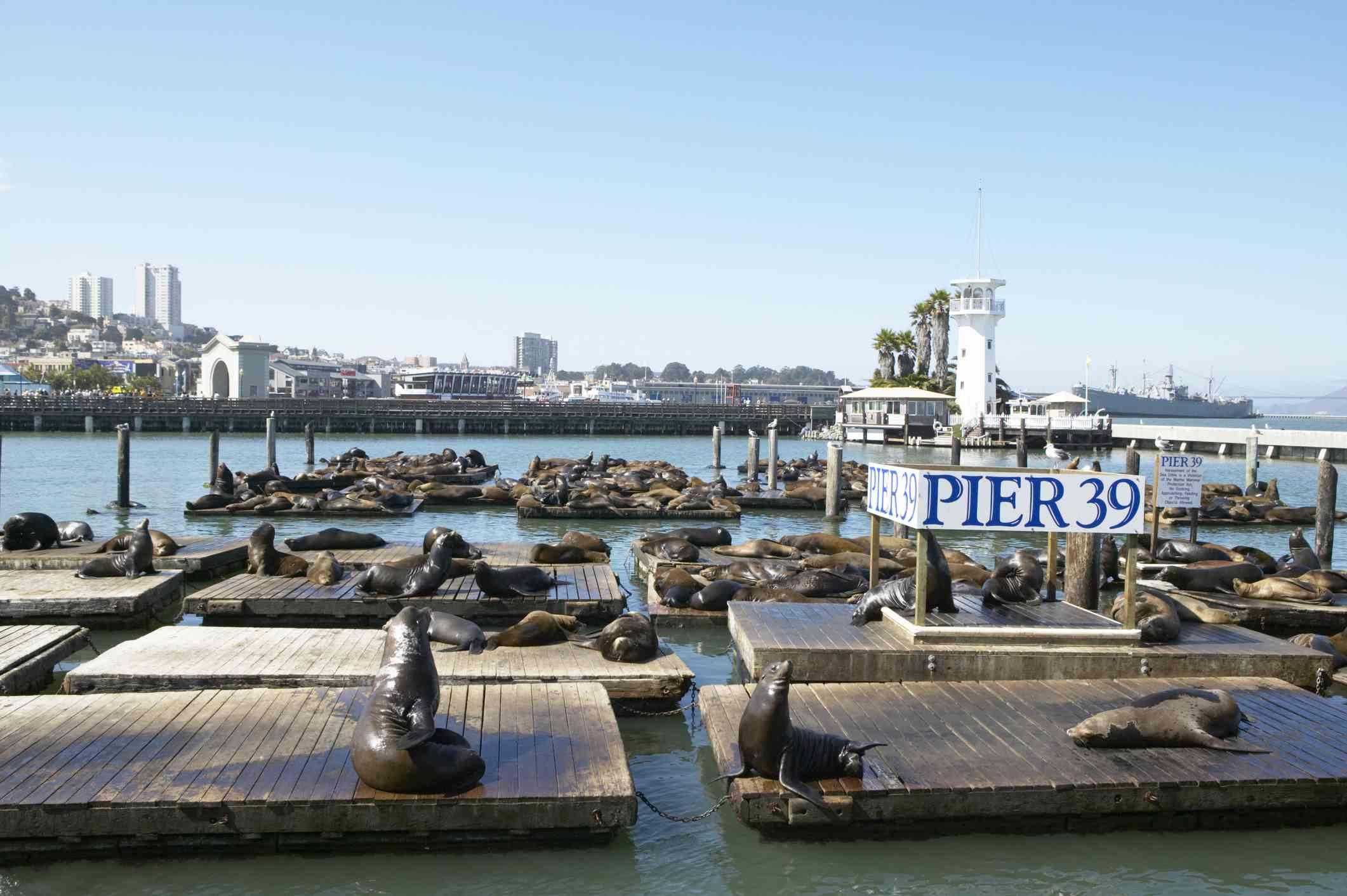 Sea lions near San Francisco's Pier 39