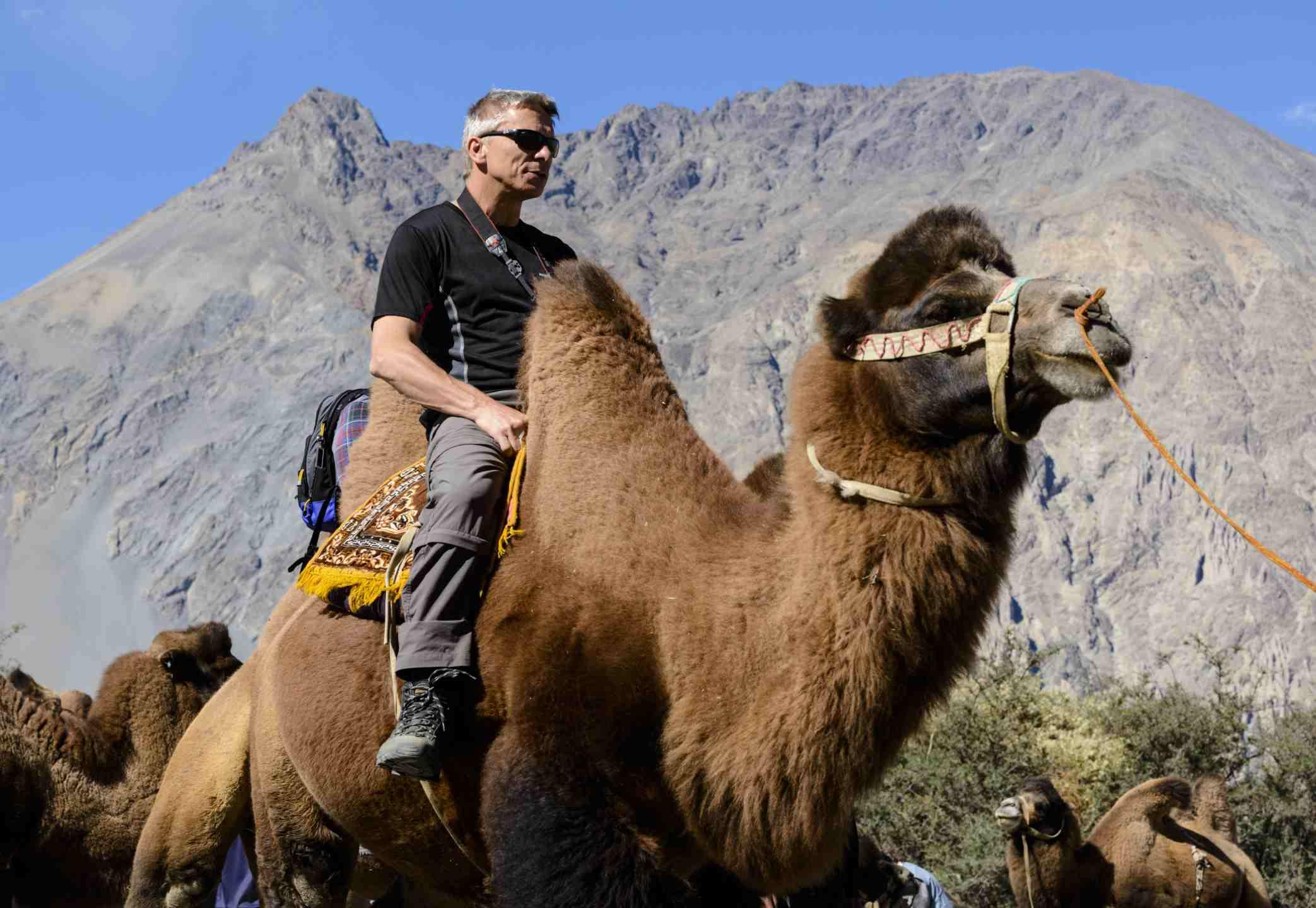 Camel safari in Ladakh.