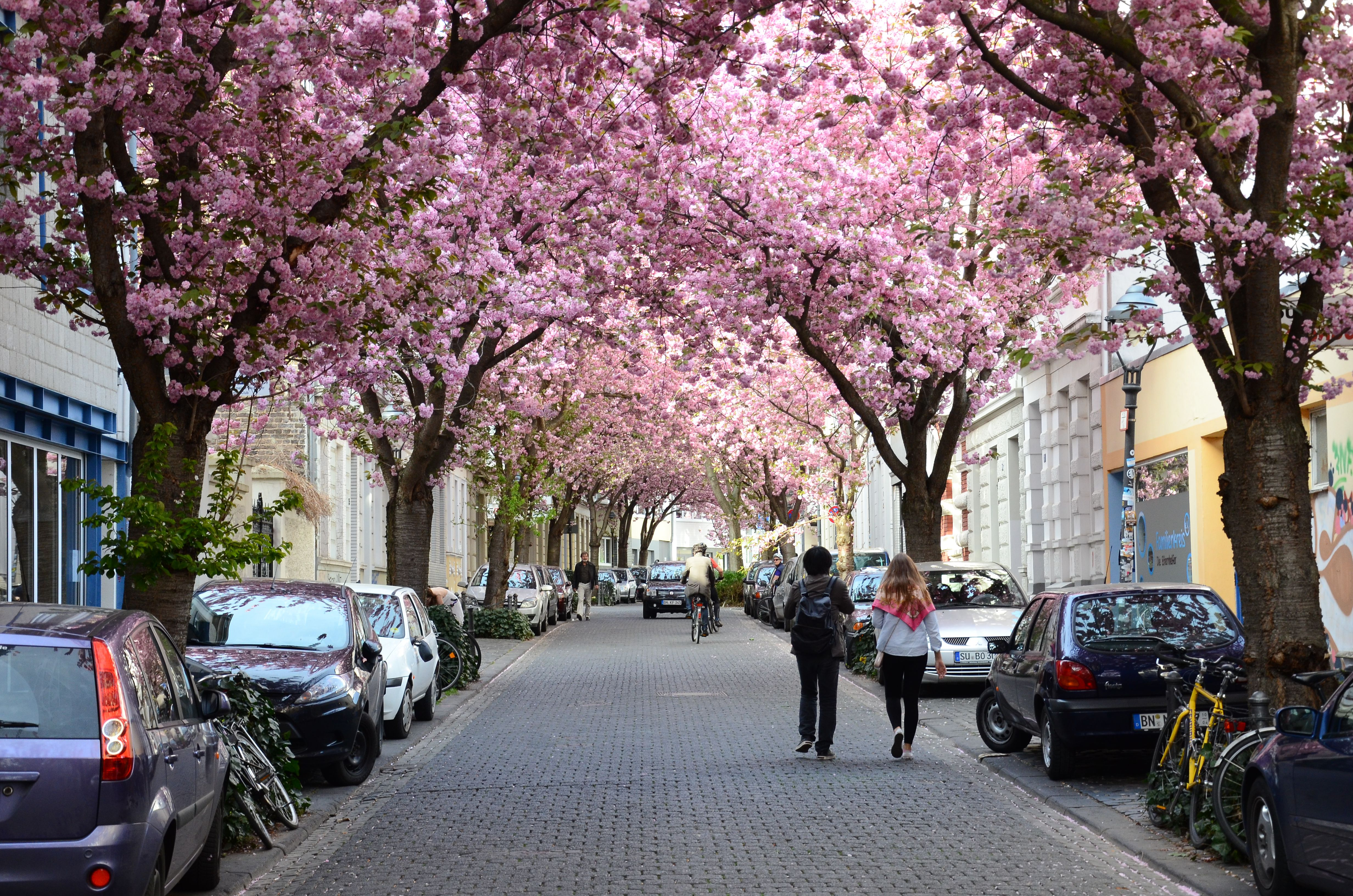 The Best Things To Do In Bonn Germany