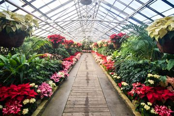 Plants blooming in the enclosed Rockefeller Park Greenhouse