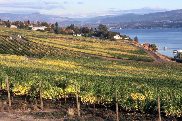 Kelowna is an excellent gateway to wineries of the Okanagan Valley. It is also a wine sub-region itself with more than 20 wineries near downtown Kelowna.