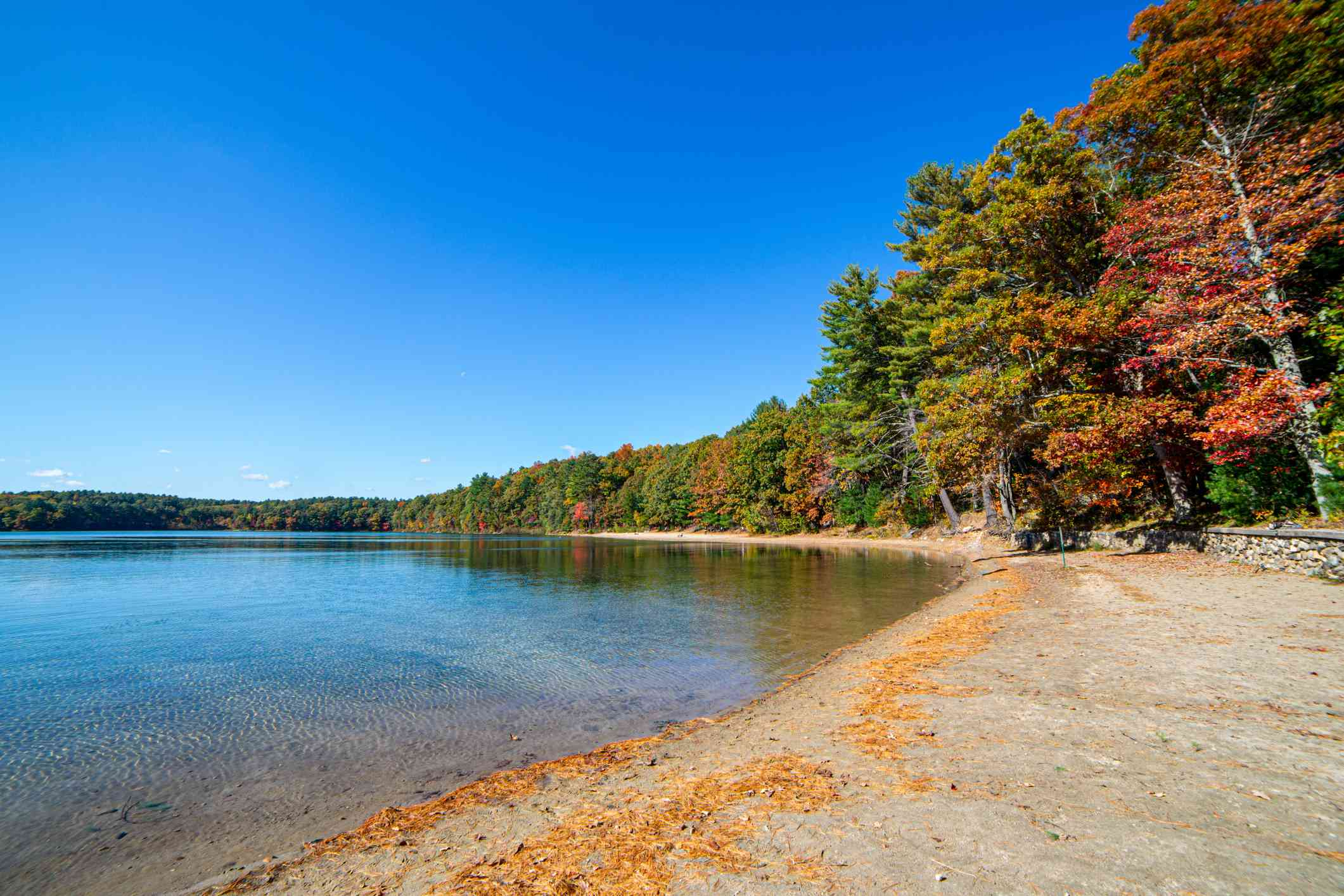 Fall foliage in Walden Pond, Concord, Massachusetts
