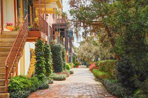 Lush street in Savannah