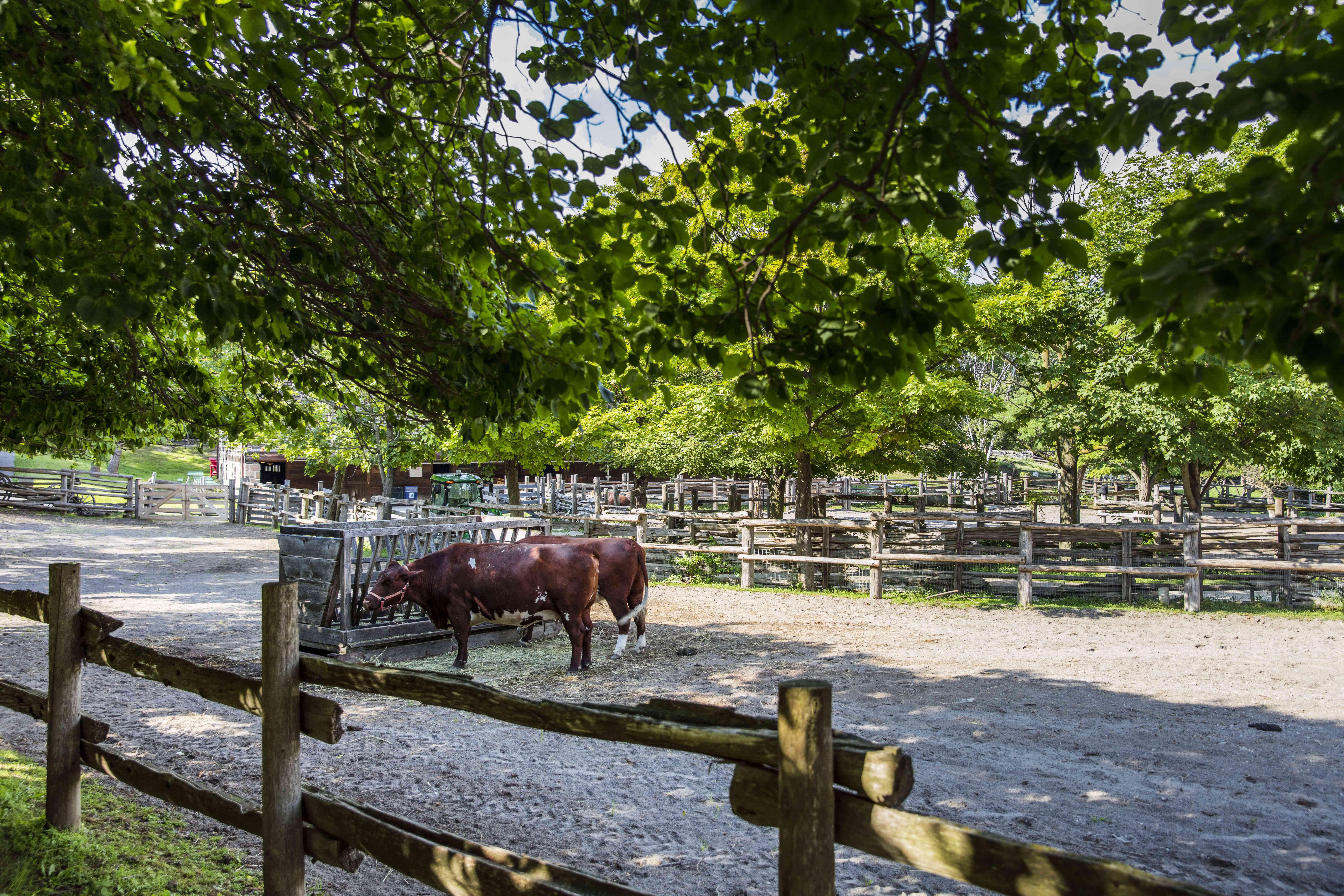 Riverdale Farm in Toronto