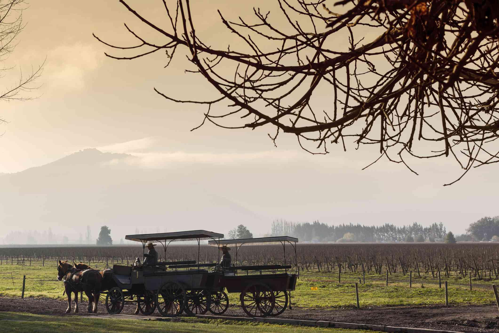 viu manent vineyards in colchagua valley