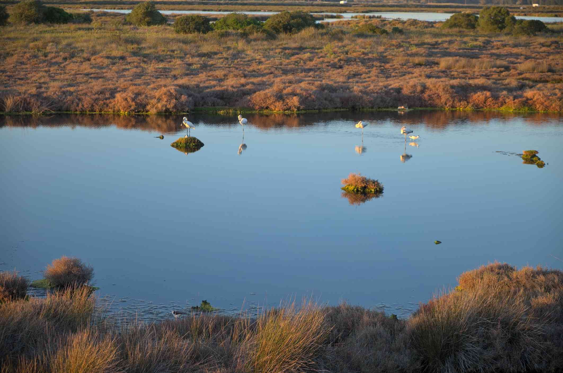 Flamingoes and lagoon in Ria Formosa