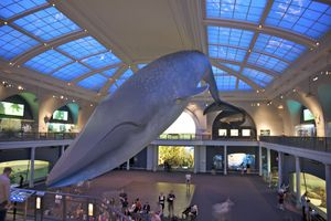 Interior with blue whale