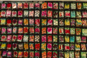 A wall filled with flower seeds