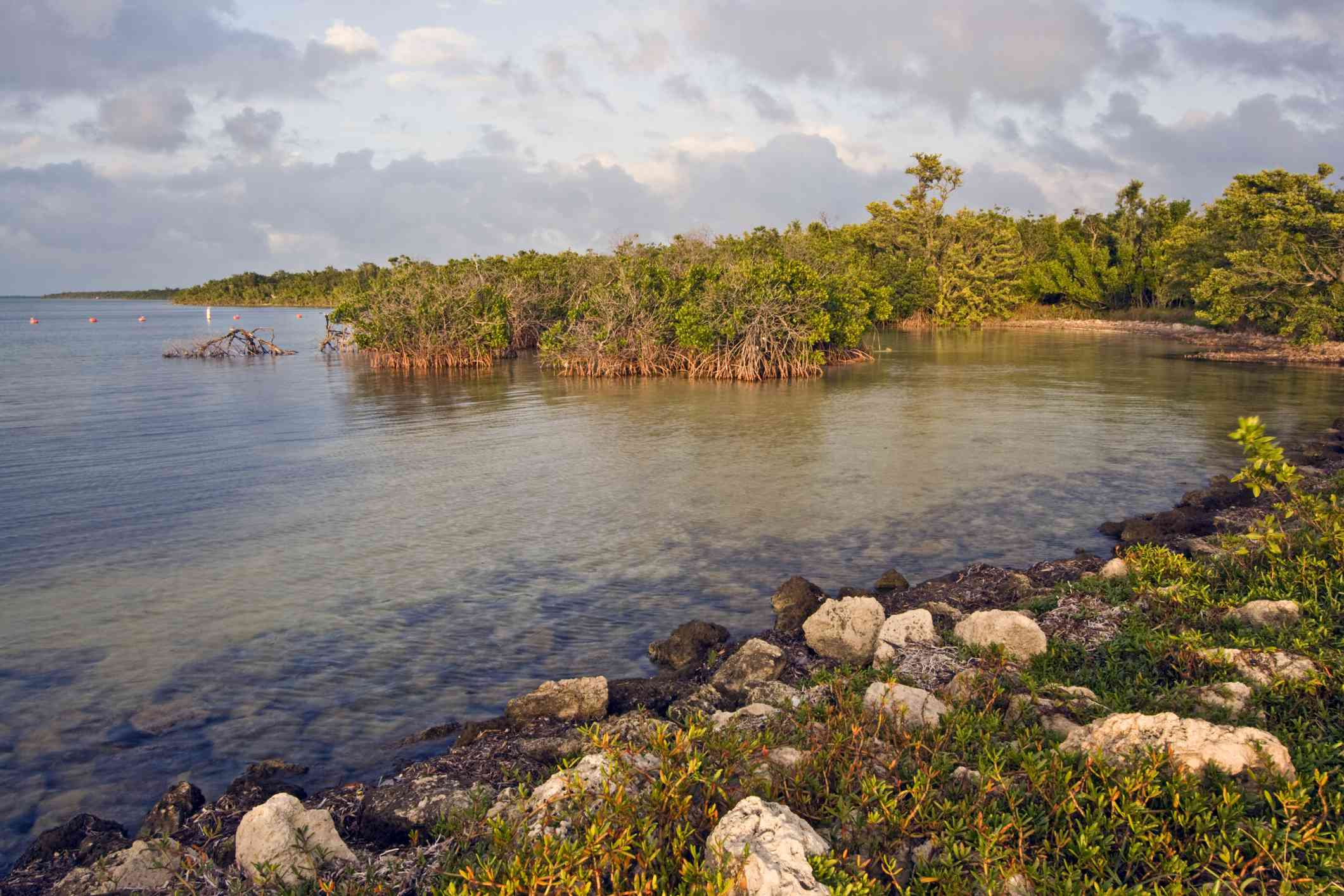 Water and mangroves in Biscayne National Park